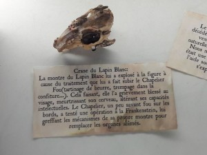 Crâne du Lapin Blanc